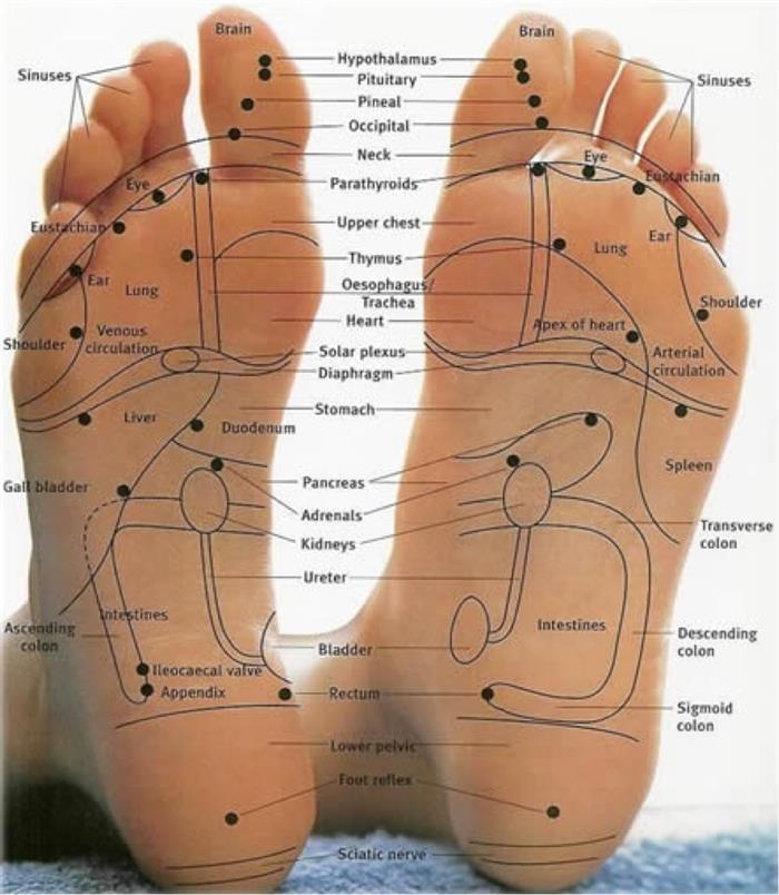 voetreflexologie body treats eksaarde gent lokeren